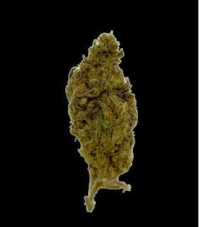 Fleur Orange Bud
