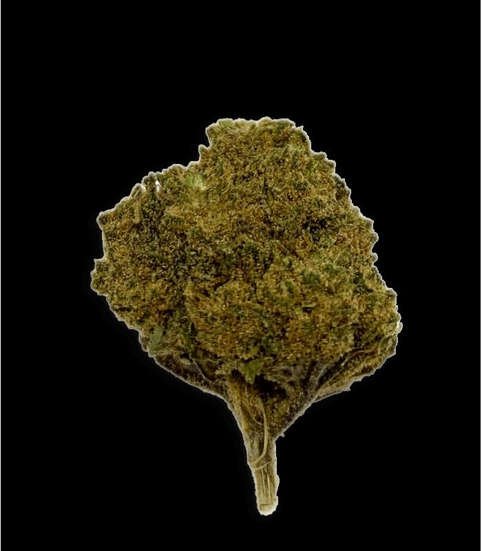 Fleur Bubble Gum