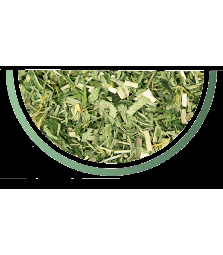 Thé vert Pop CBD détail