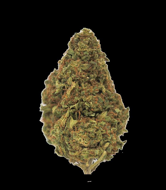fleur cbd fedtonic - fleur de cannabis thérapeuthique